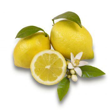 Citron de Siracuse IGP